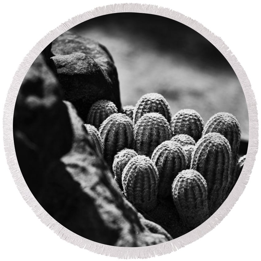 Cactus Round Beach Towel featuring the photograph Cacti B And W V2 by Douglas Barnard