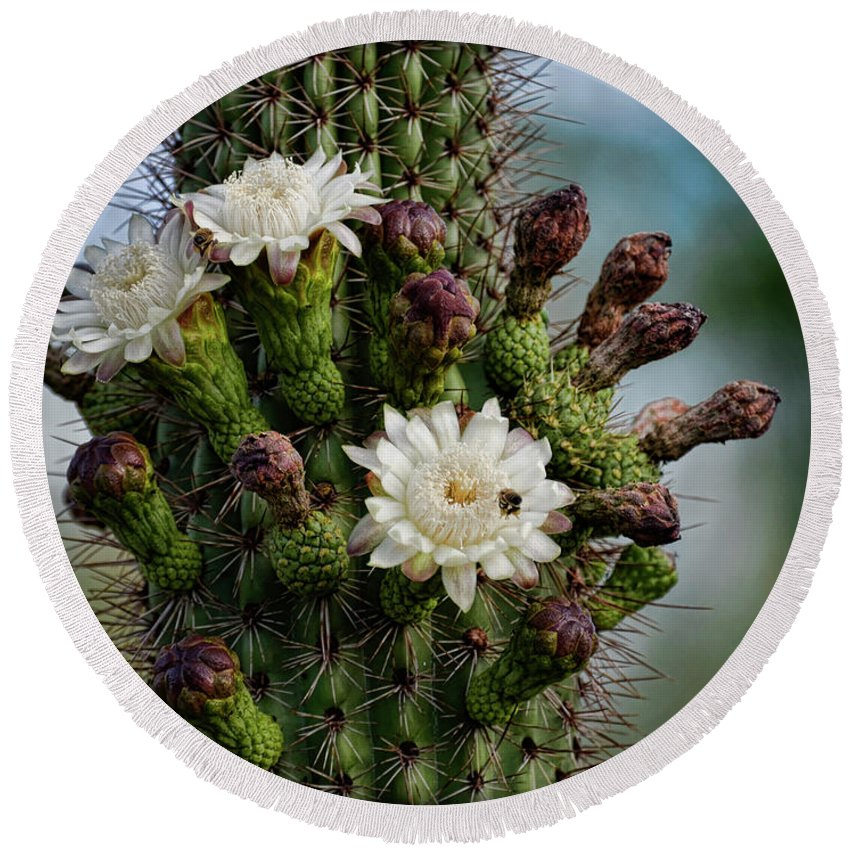 Organ Pipe Cactus Flowers Round Beach Towel featuring the photograph Cacti Bouquet by Saija Lehtonen