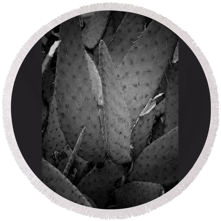 Botanicals Round Beach Towel featuring the photograph Cactus 5256 by Timothy Bischoff