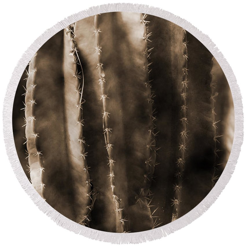 Panama Round Beach Towel featuring the photograph Cactus Sepia Tone Panama by Greg Kluempers