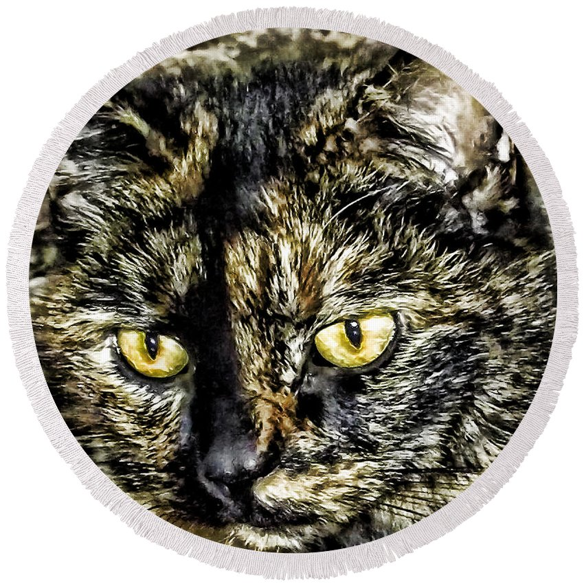 Cat Round Beach Towel featuring the photograph Cali by Kristie Bonnewell