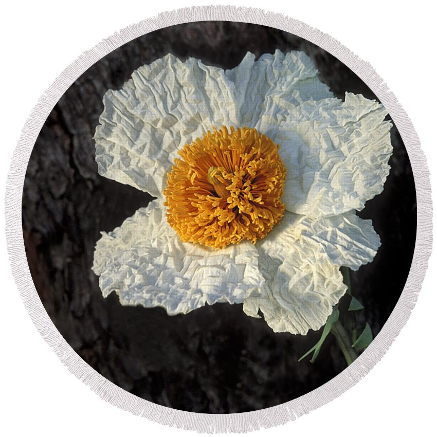 Poppy Round Beach Towel featuring the photograph California Poppy by Dave Mills