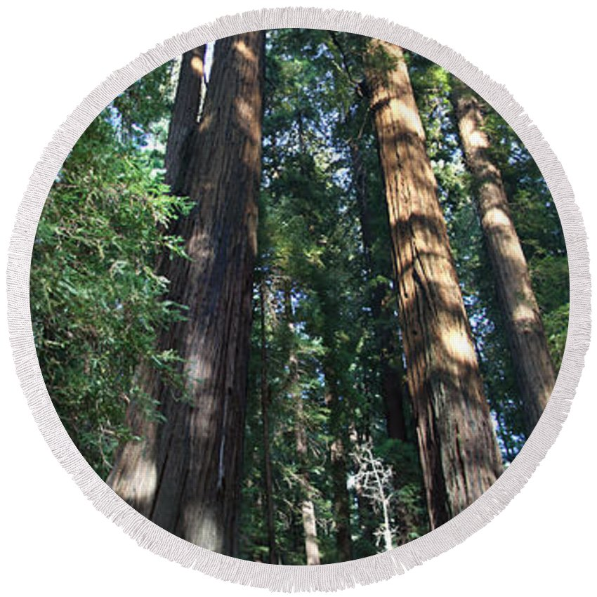 Sequoia Round Beach Towel featuring the photograph California Redwood by Christiane Schulze Art And Photography