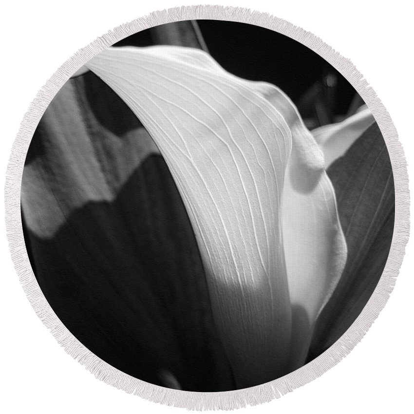 Zantedeschia Round Beach Towel featuring the photograph Calla Lily Named Crystal Blush by J McCombie