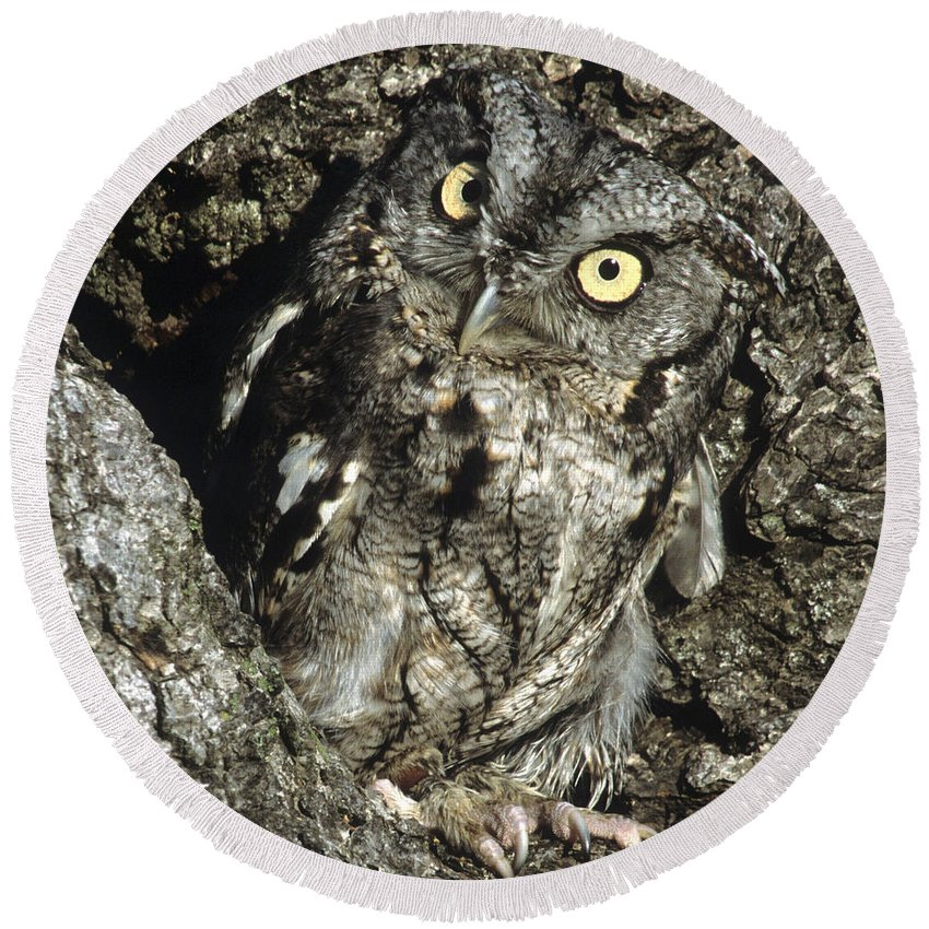 Owl Round Beach Towel featuring the photograph Camouflaged Screech Owl by Larry Allan