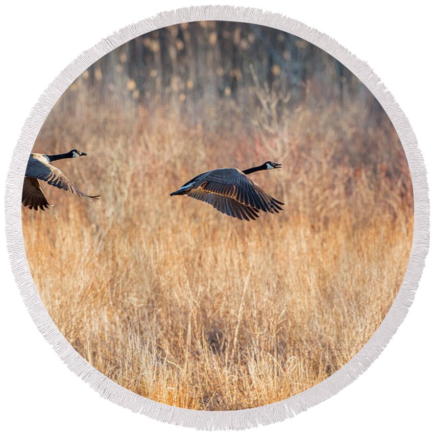 Canada Geese Round Beach Towel featuring the photograph Canada Geese by Bill Wakeley