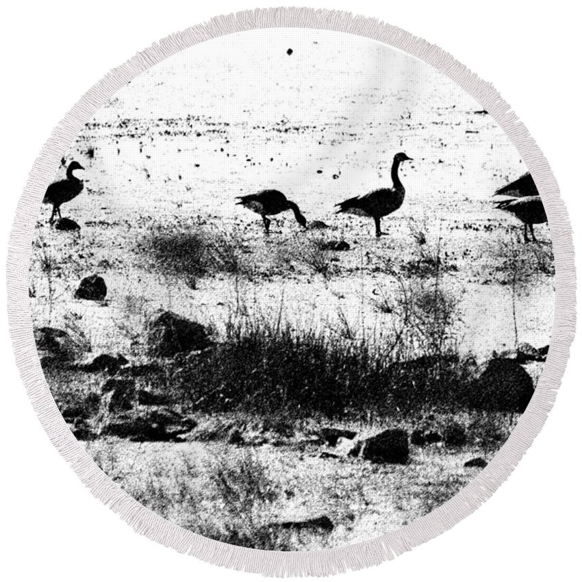 Canada Goose Round Beach Towel featuring the photograph Canada Geese In Black And White by Betty LaRue