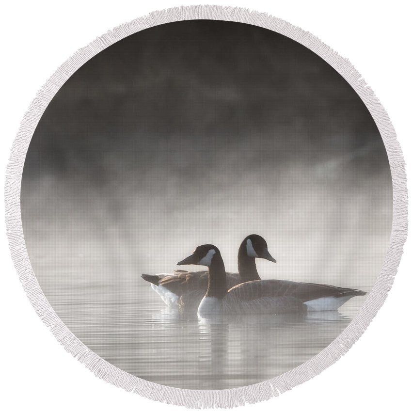 Goose Round Beach Towel featuring the photograph Canada Geese In The Fog Square by Bill Wakeley