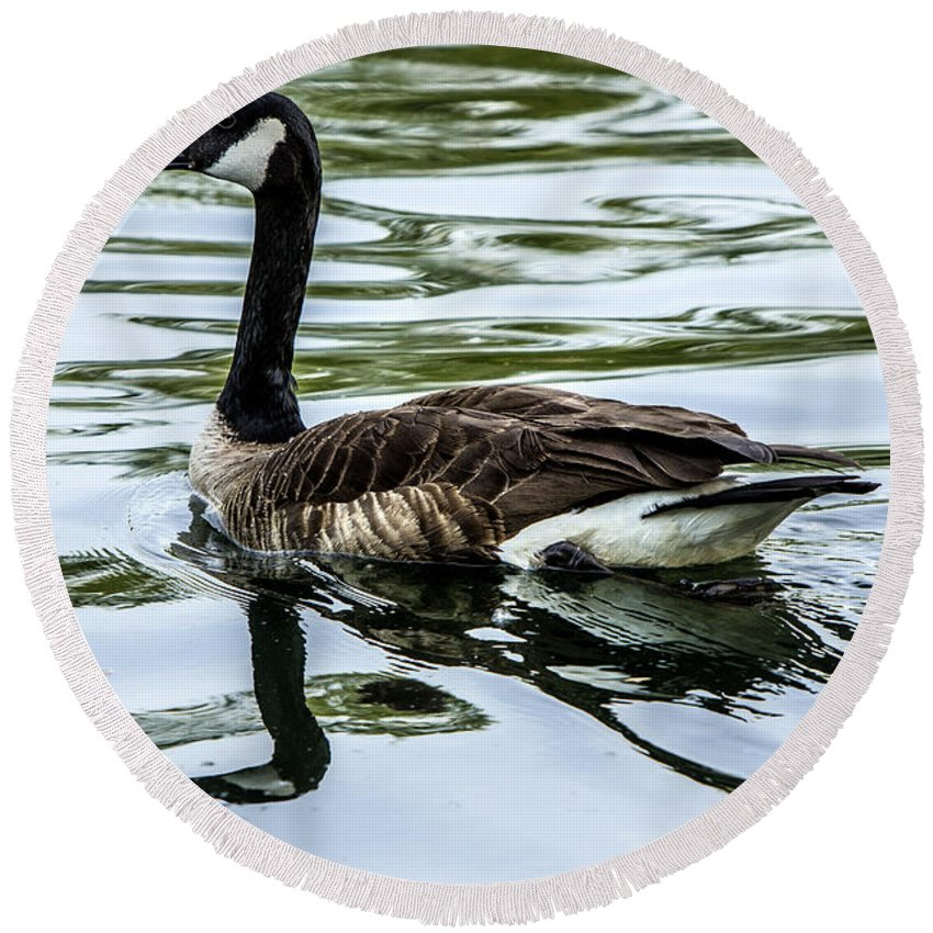 Goose Round Beach Towel featuring the photograph Canada Goose by Diana Powell