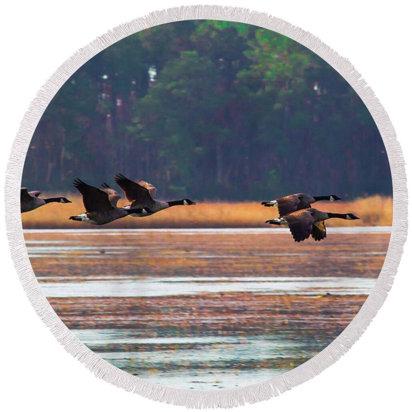 Canada Round Beach Towel featuring the photograph Canadian Geese In Flight by Scott Hervieux