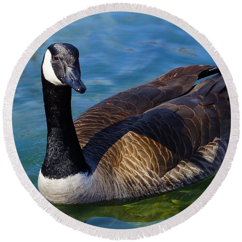 Animal Round Beach Towel featuring the photograph Canadian Goose by Jennifer White