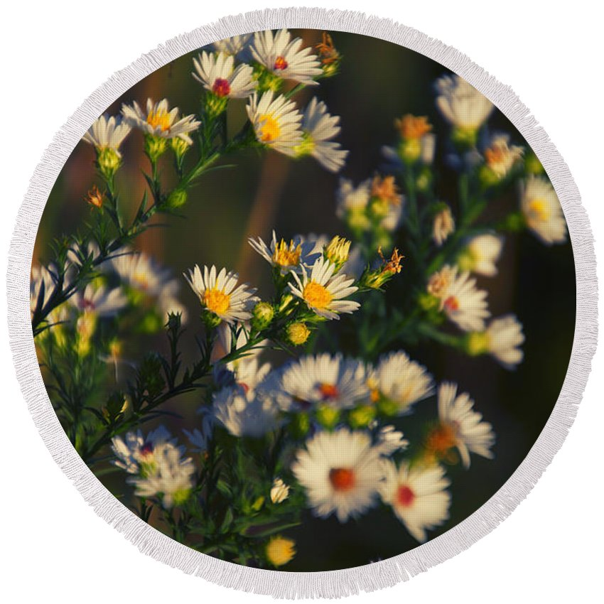 Daisy Round Beach Towel featuring the photograph Can't Get Enough Of Your Love by Thomas Woolworth