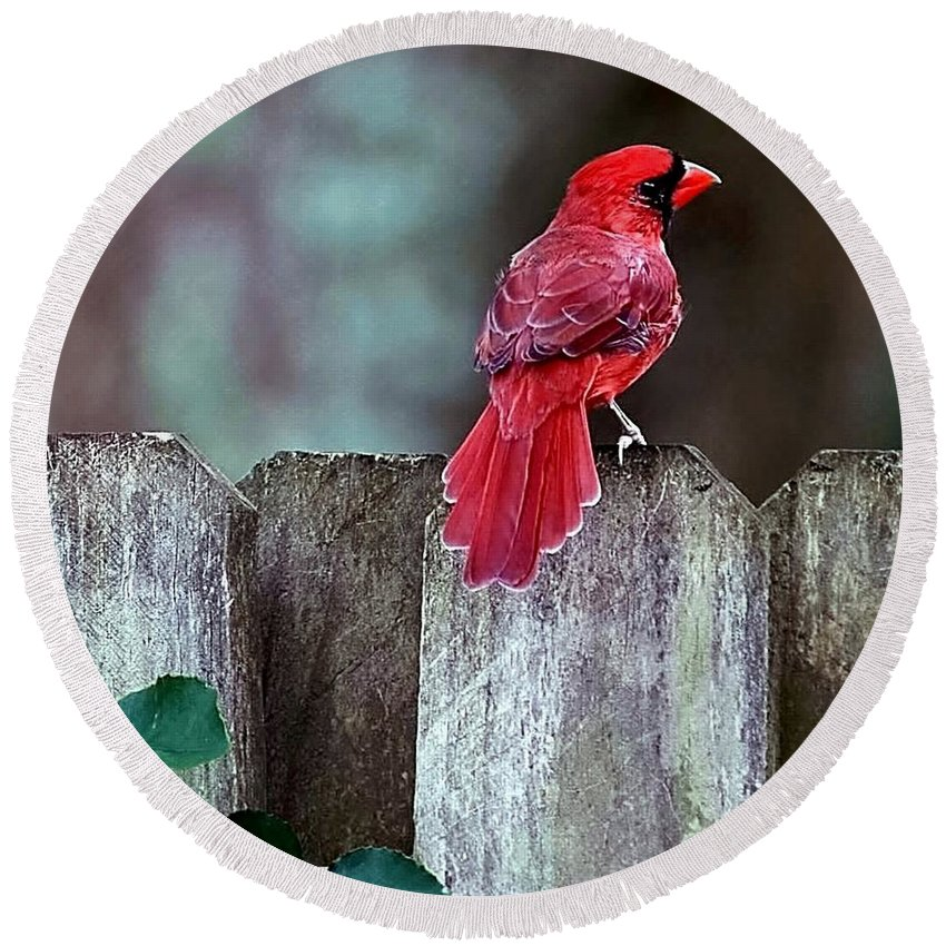 Bird Round Beach Towel featuring the photograph Cardinal by Randy Matthews