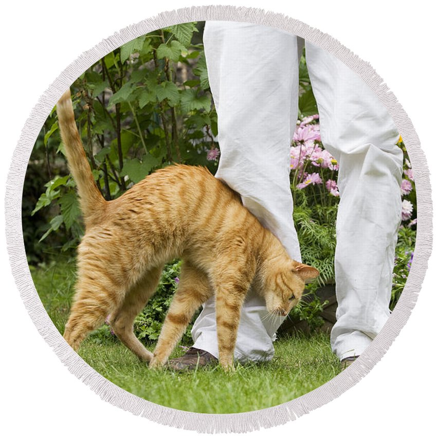 Cat Round Beach Towel featuring the photograph Cat Brushing Against Legs by Jean-Michel Labat