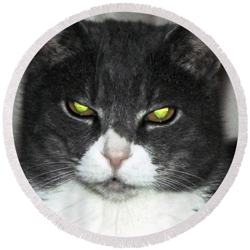 Cat Round Beach Towel featuring the photograph Cat Eyes by Wendy Gertz
