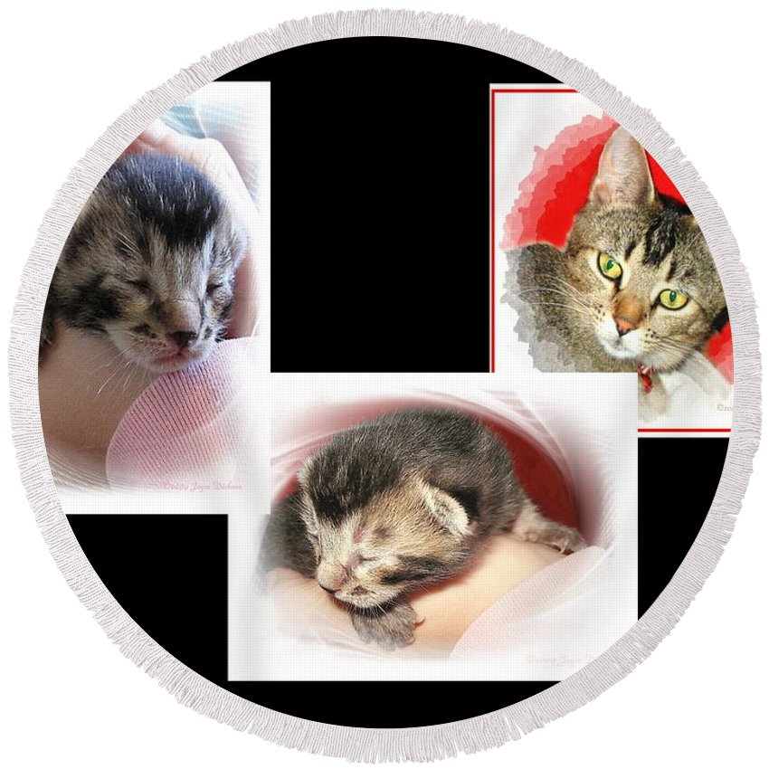 Cat Round Beach Towel featuring the photograph Cat Family by Joyce Dickens