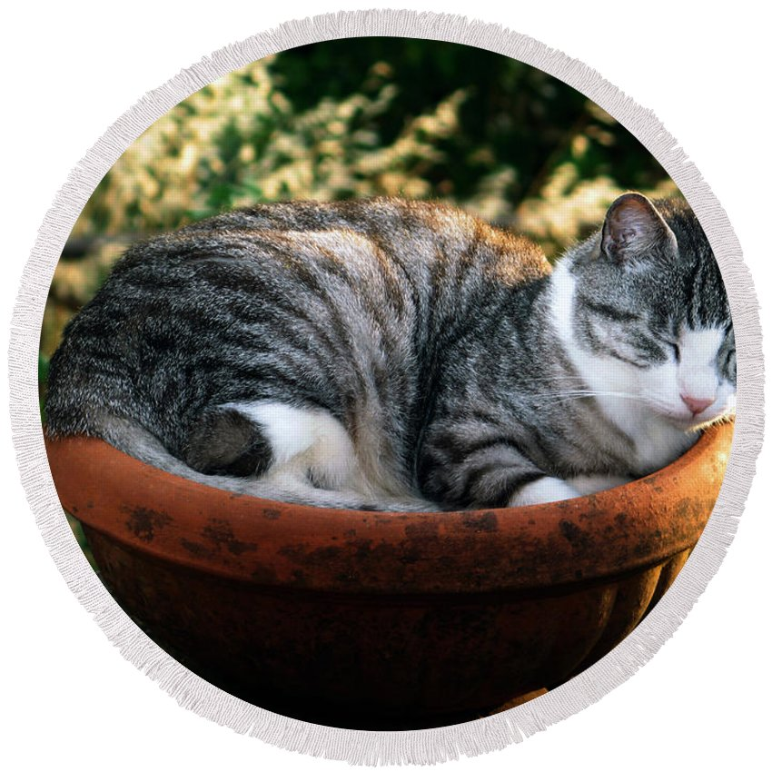 Cat Round Beach Towel featuring the photograph Cat In A Flowerpot by Tim Holt