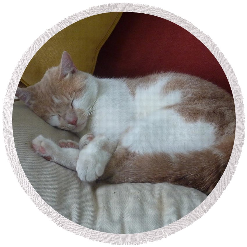 Cat Round Beach Towel featuring the photograph Barn Cat Nap Time by Diane Palmer
