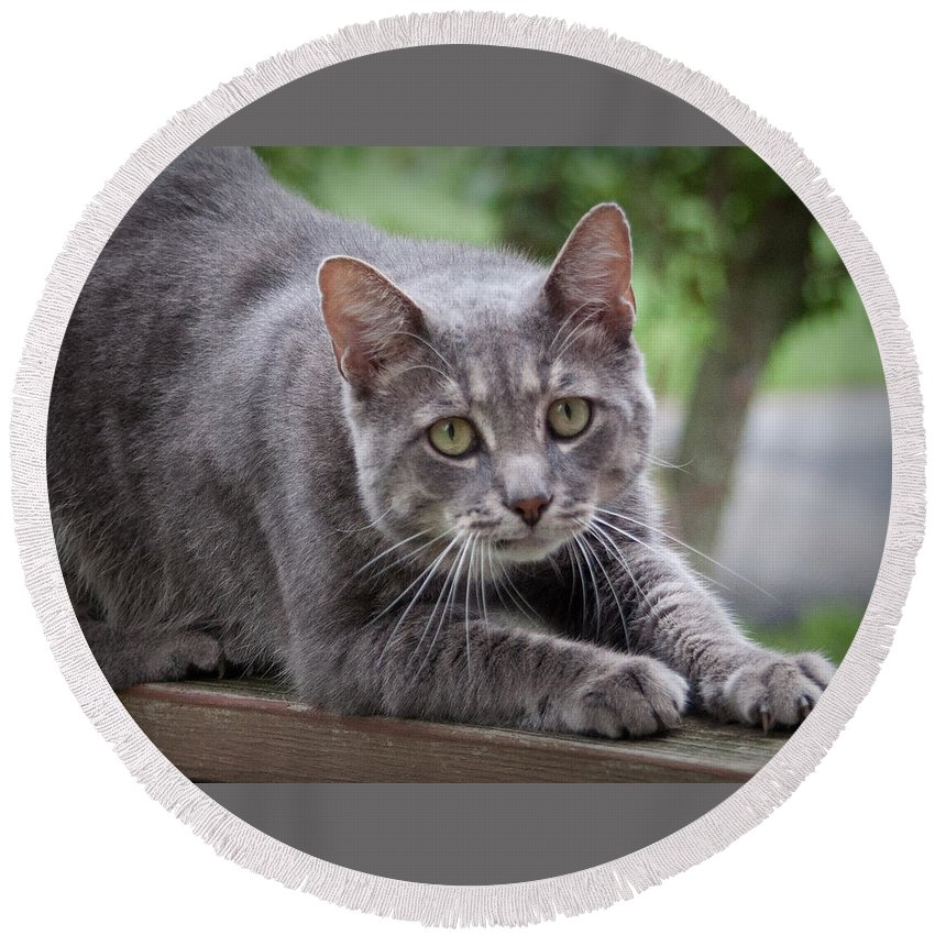 Cat Round Beach Towel featuring the photograph Cat Stretch by Photos By Cassandra