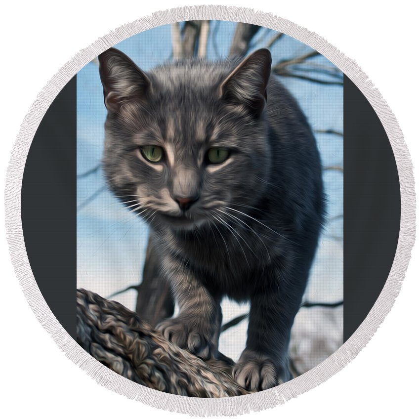 Cat Round Beach Towel featuring the photograph Cat Tree by Photos By Cassandra