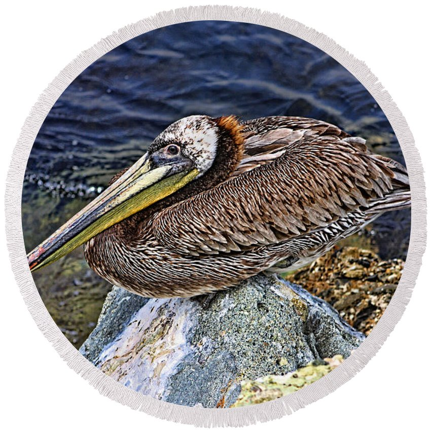 Pelican Round Beach Towel featuring the photograph Catalina Pelican by Tommy Anderson