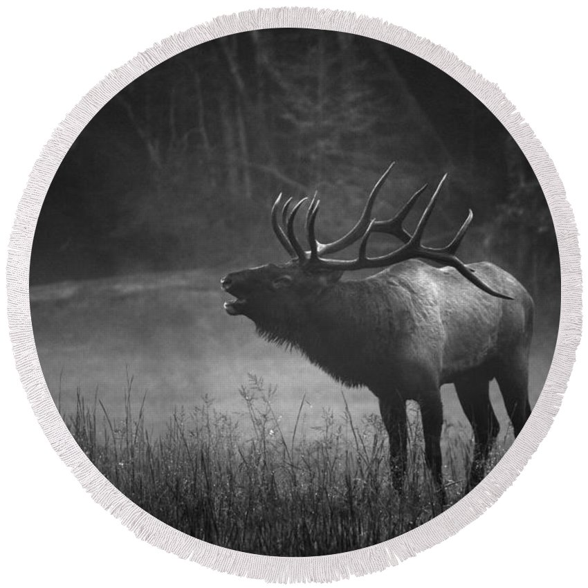 Carol R Montoya Round Beach Towel featuring the photograph Cataloochee Bull Elk by Carol Montoya