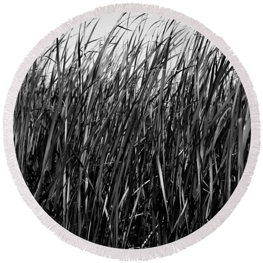 Cattail Round Beach Towel featuring the photograph Cattail Reed Background by Donald Erickson