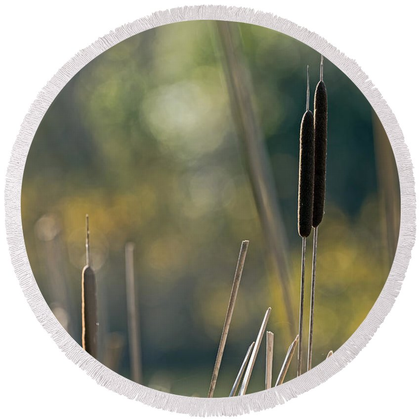 Bokeh Round Beach Towel featuring the photograph Cattails by Kate Brown