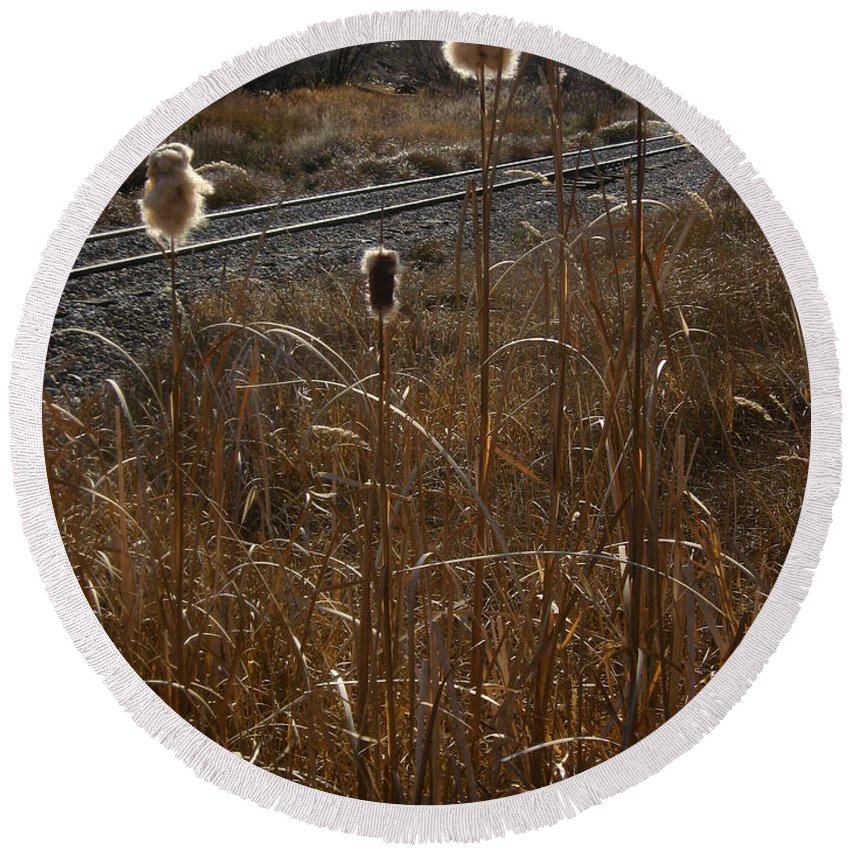 Color Photography Round Beach Towel featuring the photograph Cattails by Kirk Griffith