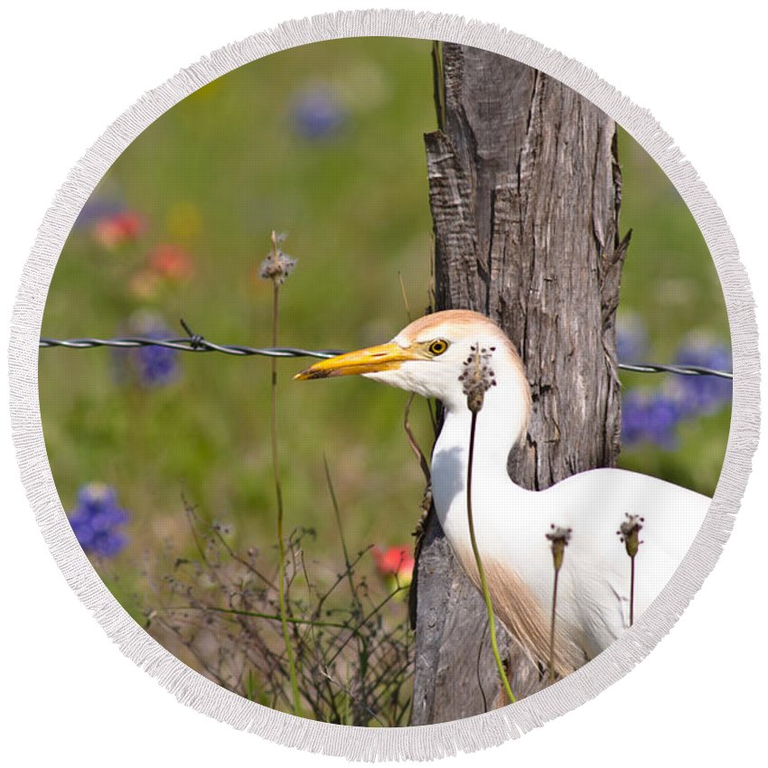 Animal Round Beach Towel featuring the photograph Cattle Egret At Fenceline by Robert Frederick