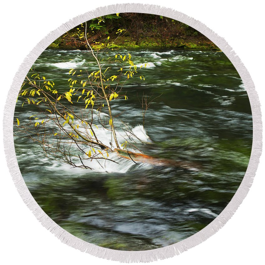 Nature Round Beach Towel featuring the photograph Caught By The Water by Belinda Greb