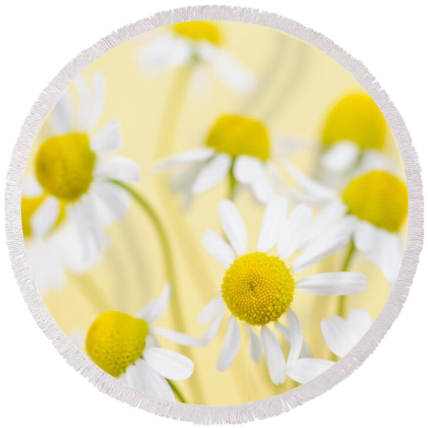 Chamomile Round Beach Towel featuring the photograph Chamomile Flowers Close Up by Elena Elisseeva
