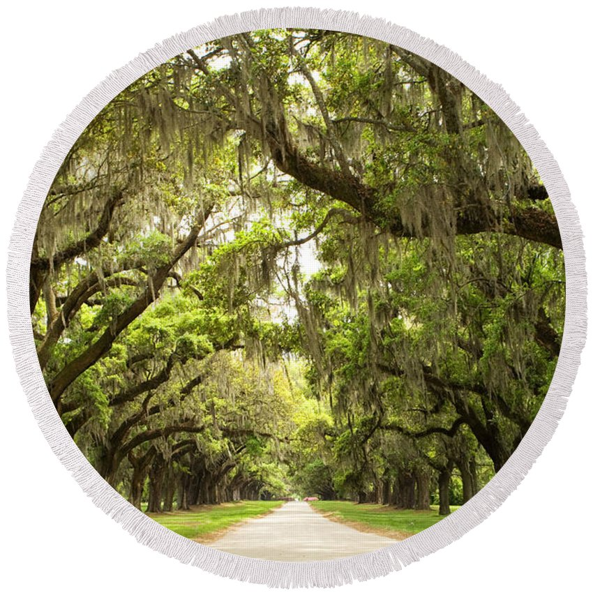 Live Oaks Round Beach Towel featuring the photograph Charleston Avenue Of Oaks by Stephanie McDowell