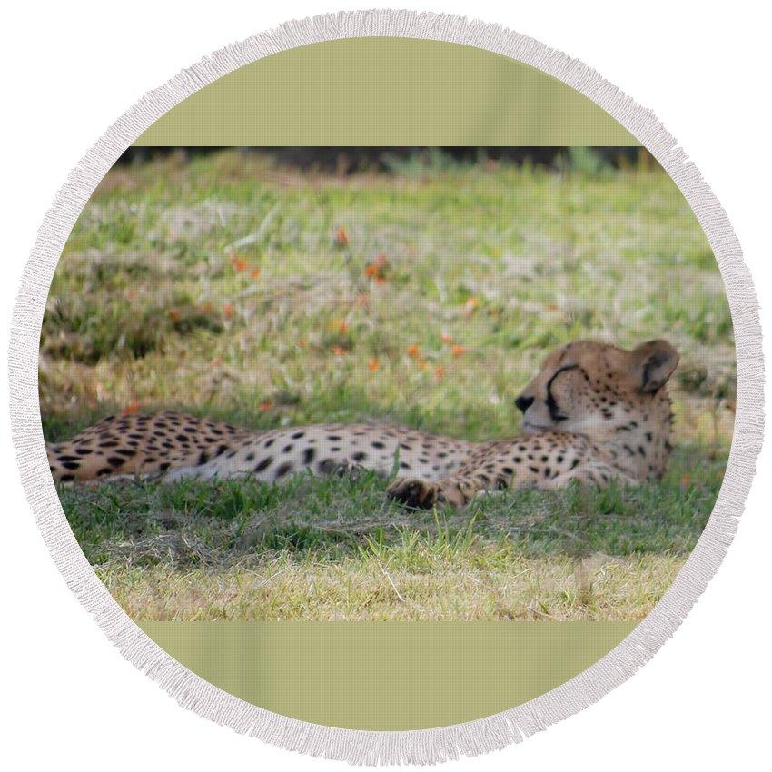 Cheetah Round Beach Towel featuring the photograph Cheetah by Susan Garren