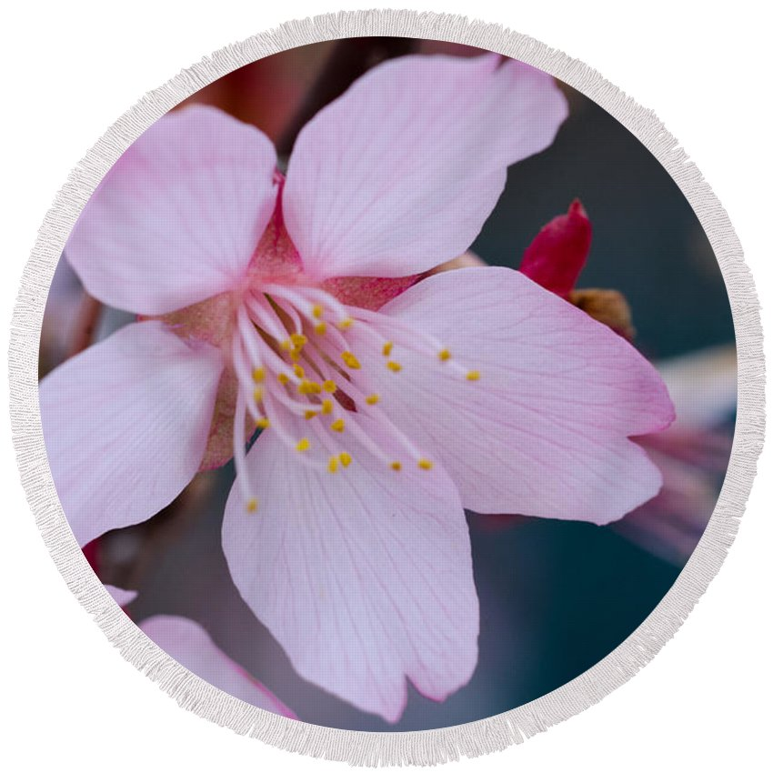 Cherry Blossom Round Beach Towel featuring the photograph Cherry Blossom Special by Jennifer Stockman