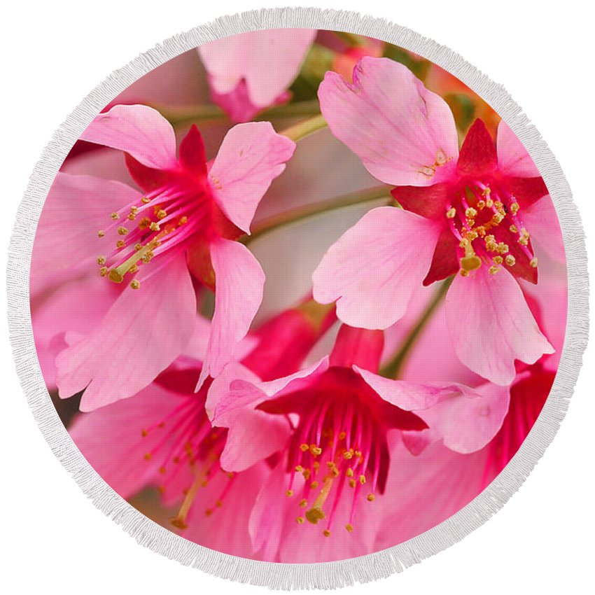 Cherry Blossoms Round Beach Towel featuring the photograph Cherry Blossom Special by Regina Geoghan