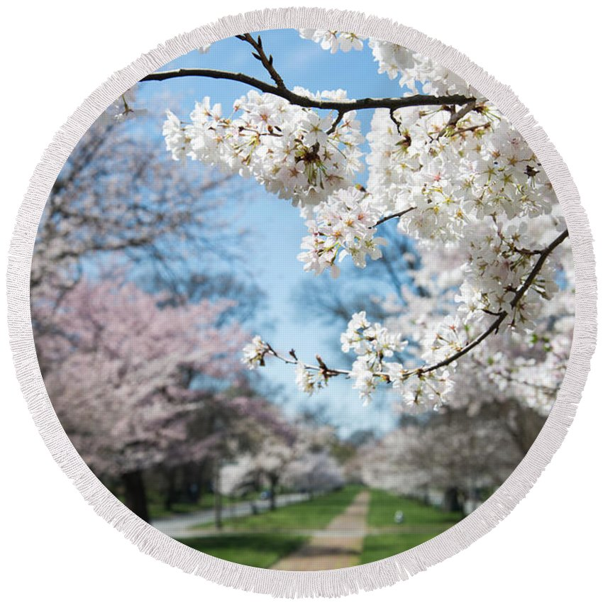 Tree Round Beach Towel featuring the photograph Cherry Trees by Stacy Abbott