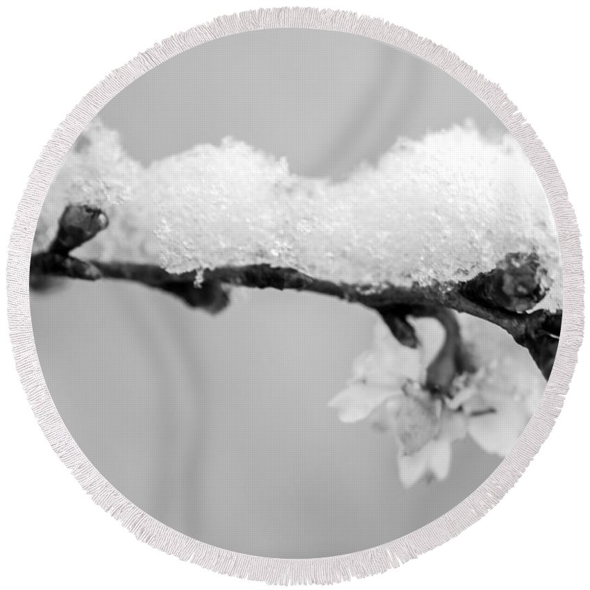 Iris Holzer Richardson Round Beach Towel featuring the photograph Cherryblossom With Snow by Iris Richardson