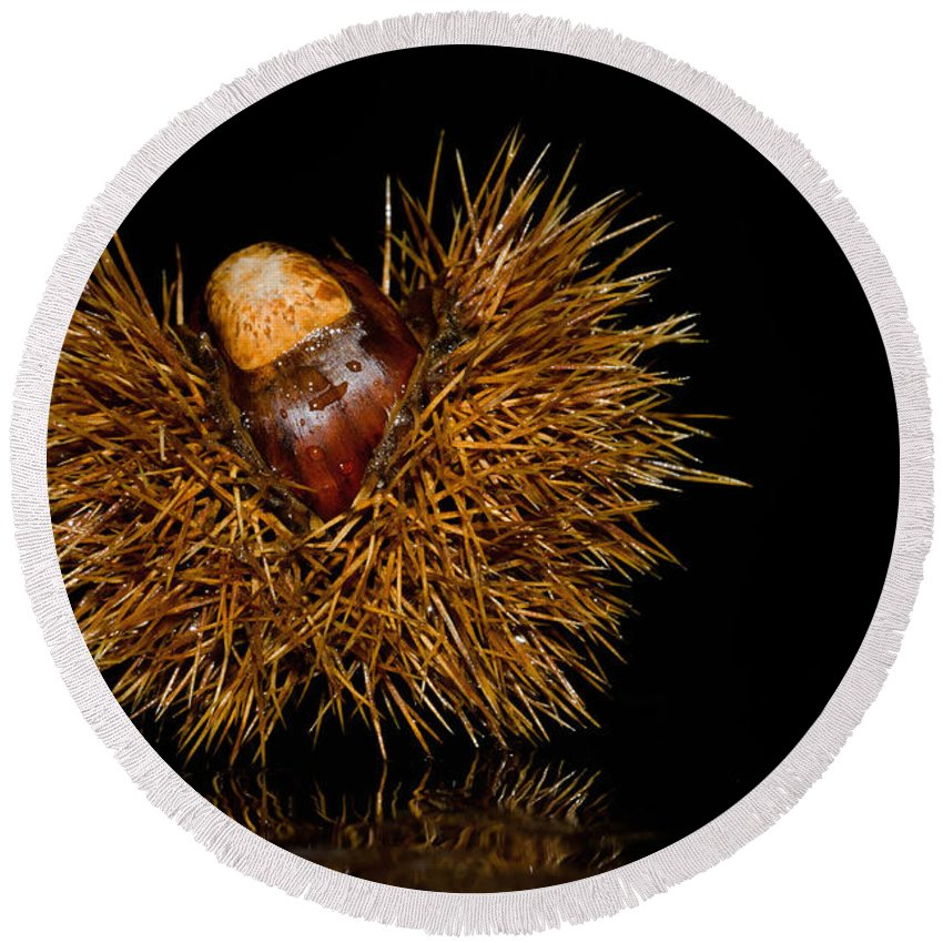 Chestnuts Round Beach Towel featuring the photograph Chestnuts by Mats Silvan