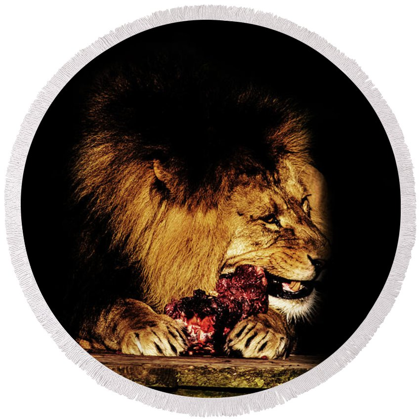 Lion Round Beach Towel featuring the photograph Chew On That by Martin Newman