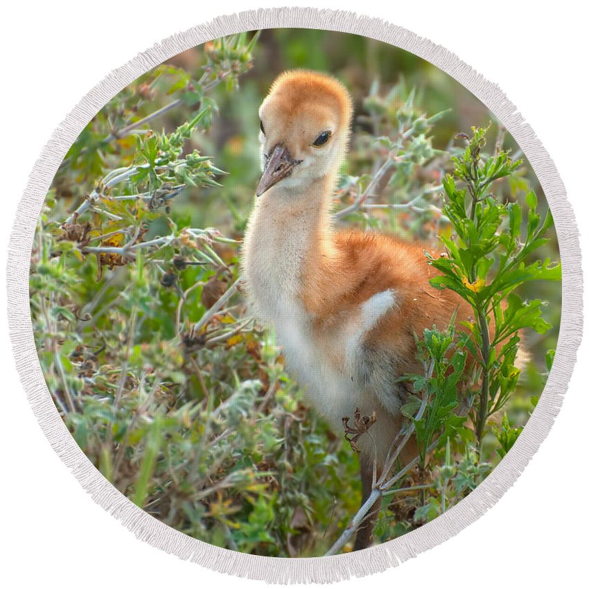 Sand Round Beach Towel featuring the photograph Chick 107 by Photos By Cassandra
