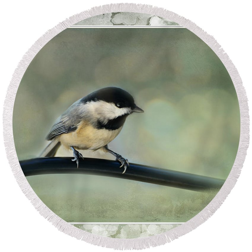 Nature Round Beach Towel featuring the photograph Chickadee With Frame by Debbie Portwood