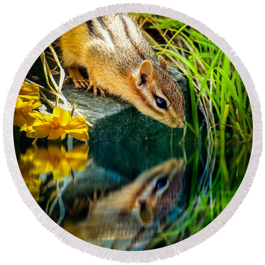Chipmunk Round Beach Towel featuring the photograph Chipmunk Reflection by Bob Orsillo