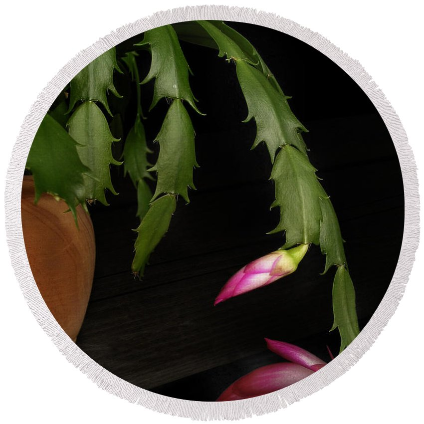 Bloom Round Beach Towel featuring the photograph Christmas Cactus by David and Carol Kelly