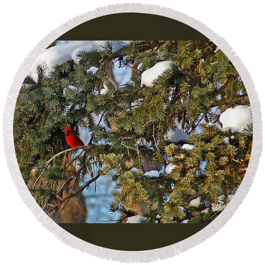 Cardinal Round Beach Towel featuring the photograph Christmas Cardinal by Aimee L Maher ALM GALLERY