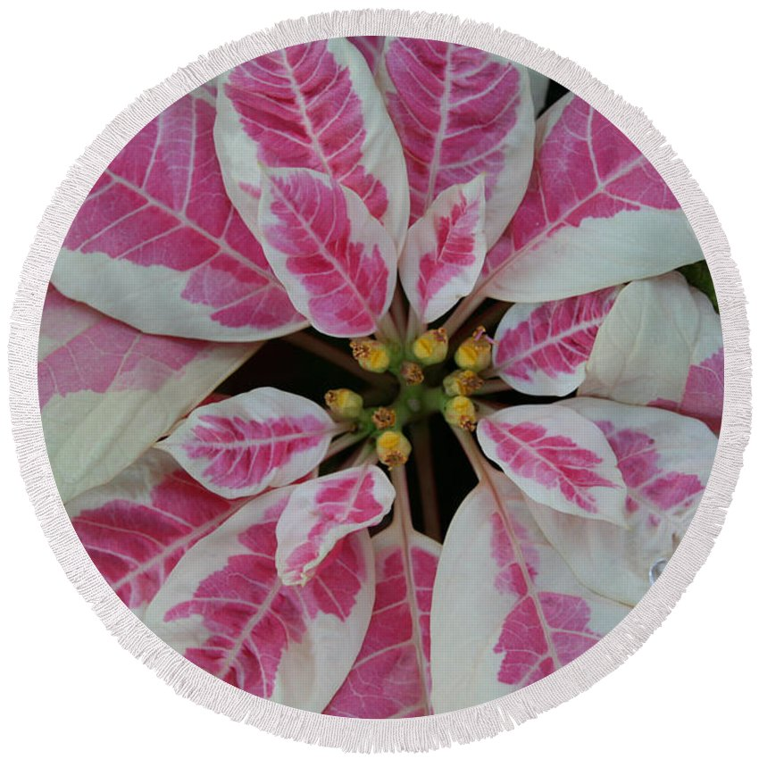 Flower Round Beach Towel featuring the photograph Christmas Floral by Susan Herber