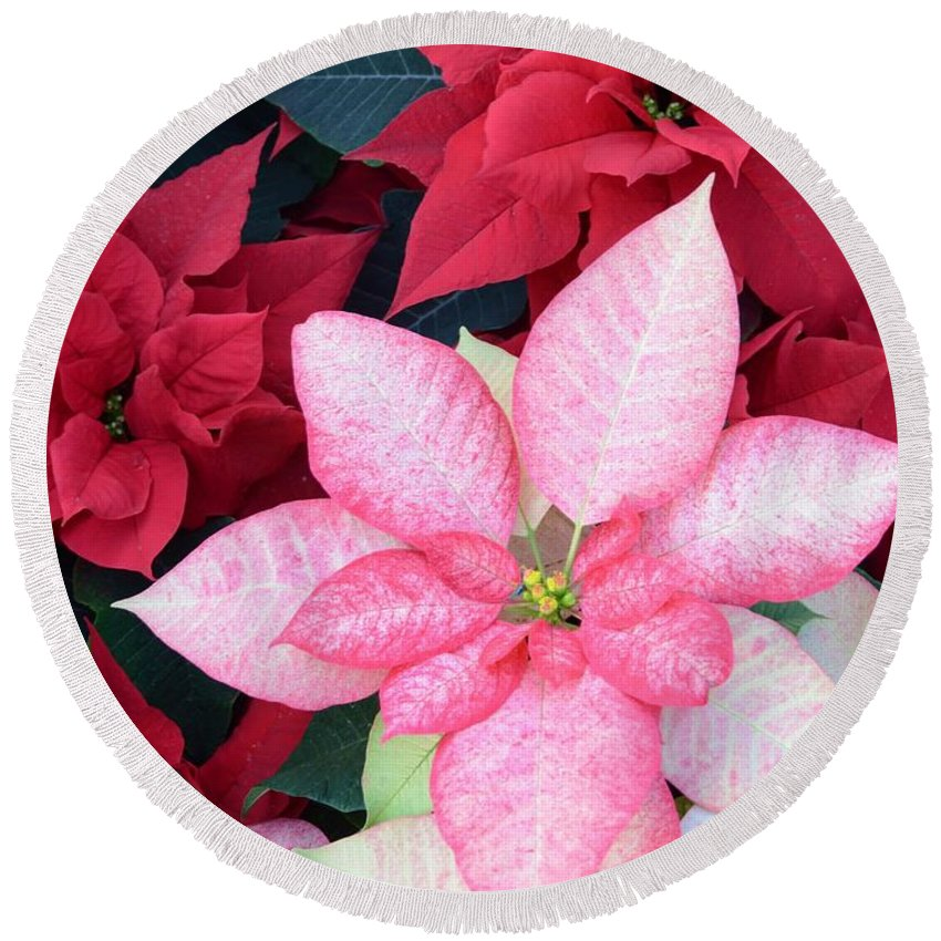 Flower Round Beach Towel featuring the photograph Christmas Pointsettia by Kathleen Struckle