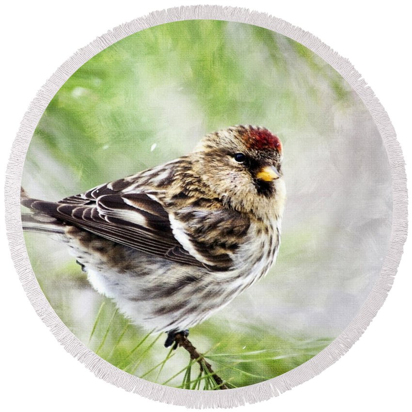 Bird Round Beach Towel featuring the painting Christmas Redpoll by Christina Rollo
