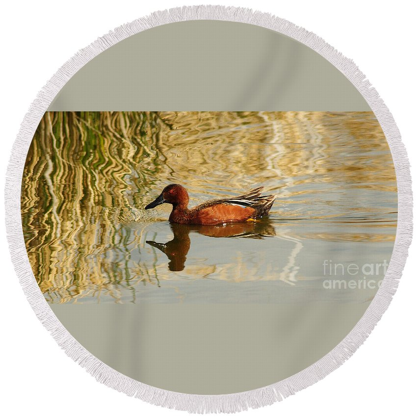 Cinnamon Teal Round Beach Towel featuring the photograph Cinnamon Teal by Vivian Christopher