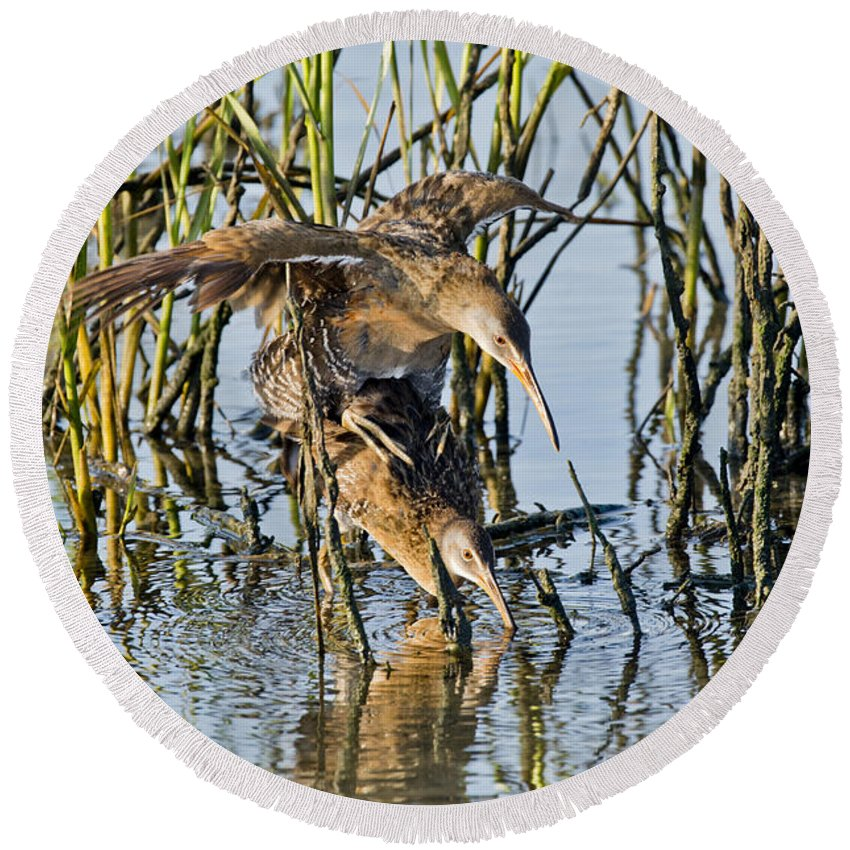 Clapper Rail Round Beach Towel featuring the photograph Clapper Rails Mating by Anthony Mercieca